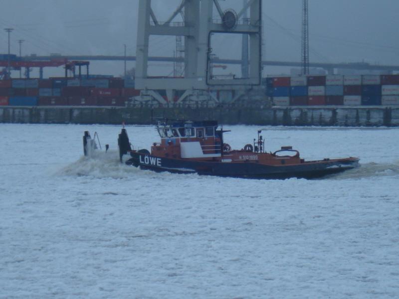 Löwe 001 am 28.1.2010_1